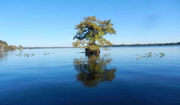 Lake Norris near Orlando.