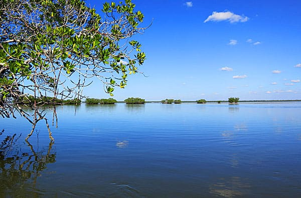 A few of islands in 10,000 Islands National Wildlife Refuge off Everglades City.