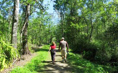 There are 12 miles of trails at Corkscrew Bird Rookery Swamp Trail.