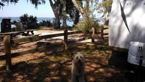 Bayside camping at Grassy Point