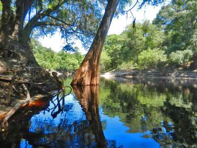 The Suwanee River will reward you with tranquility and beauty