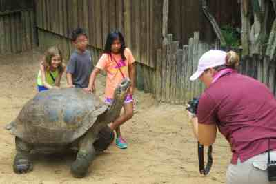 The Tortoise experience at the St. Augustine Alligator Farm is an extra $35.99 for up to five people.