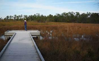 Grassy Waters Preserve Boardwalk in West Palm Beach