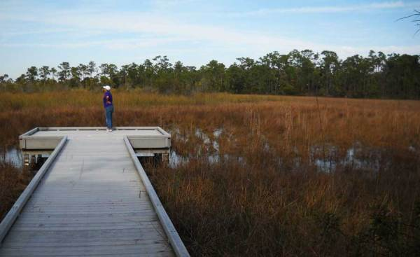 Grassy Waters Preserve Boardwalk in West Palm Beach