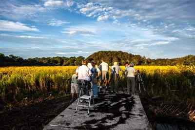 Photographers at work at past sunflower display at Pepper Ranch. Photo by Sonny Saunders.