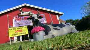 Phil's Berry Farm in the Redland, home to milk shakes and monkey bread