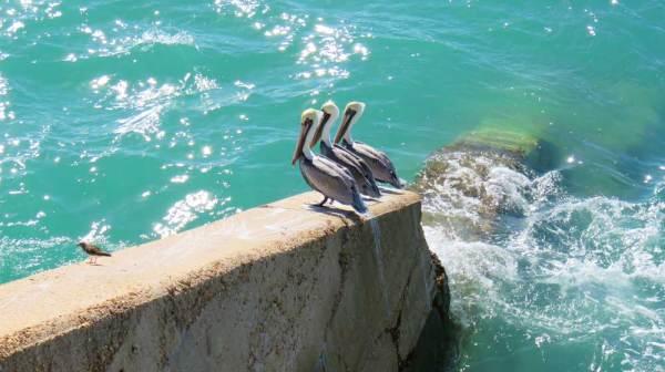 Scenery along the Florida Keys Overseas Heritage Trail.