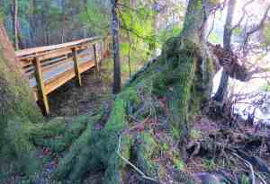The boardwalk along the Suwanee River in Fanning Springs State Park.