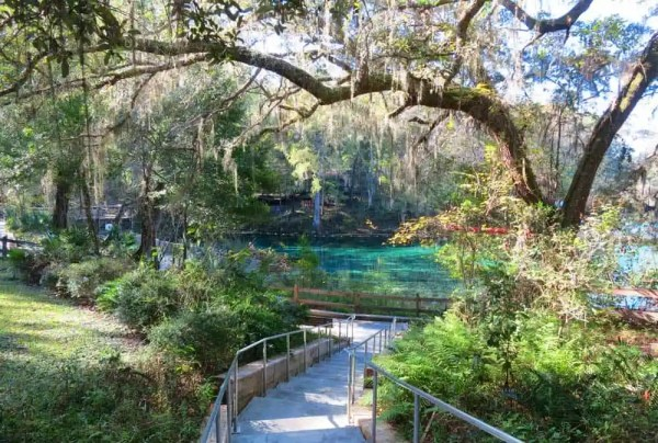 The spring at Fanning Springs State Park on the Suwanee River.