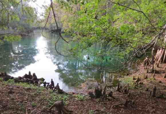 Manatee Springs State Park along the Suwanee River.