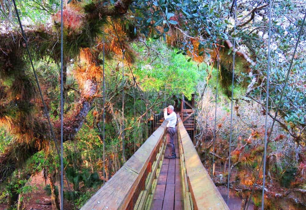 The canopy walk at Myakka River State Park. & Myakka River State Park Sarasota for wildlife nature | Florida ...