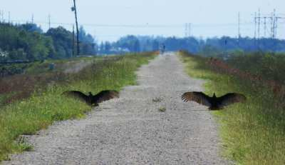 """These vultures """"greeted us"""" along the levee bike trail between Lox Road and Atlantic Boulevard. (Photo: Bonnie Gross)"""