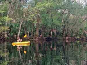 Wekiva River paddler