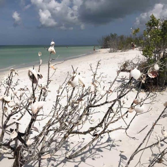 Seashell tree at Tigertail Beach on Marco Island. (Photo: Bonnie Gross)