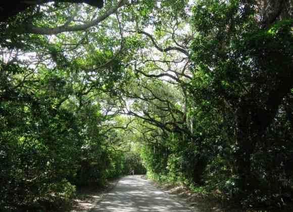 Hugh Taylor Birch State Park in Fort Lauderdale