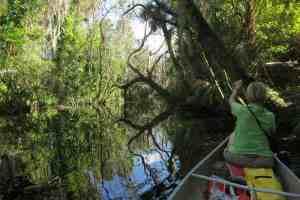 Bedman Creek, a tributary of the Caloosahatchee River near Alva.