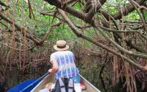Mangrove tunnels on the Turner River in the Big Cypress Preserve get tight and require some ducking and dodging. (Photo: Bonnie Gross)