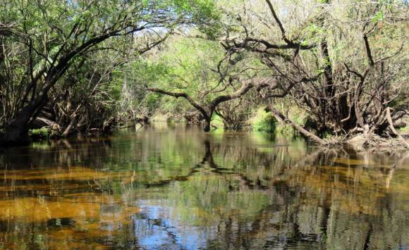 The Little Manatee has been designated an Outstanding Florida Waterway by the Florida Department of Environmental Protection.