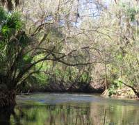 Kayaking the Alafia River near Tampa