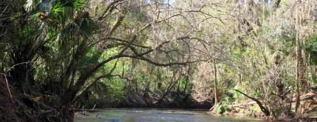 Kayaking the Alafia River near Tampa