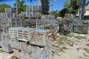 Crab traps piled nearing the working waterfront in Cortez. (Photo Bonnie Gross)