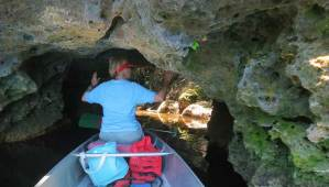 The Suwanee Rive has limestone rock banks that form interesting caves and crevices. (Photo: David Blasco)