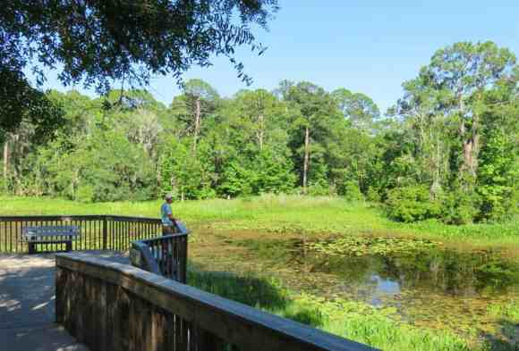 St. Marks National Wildlife Refuge: Your first stop should be the wildlife refuge headquarters, whose deck overlooks a pretty lily-pad-filled pond. (Photo: Bonnie Gross)