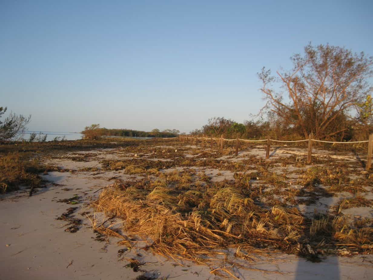 Curry Hammock State Park after Irma