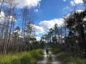 Hiker along Florida Trail off Alligator Alley. (Photo: Bonnie Gross)