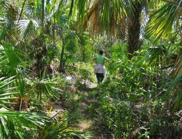 The Florida Trail heading south from Alligator Alley went through some jungly landscapes. (Photo: David Blasco)