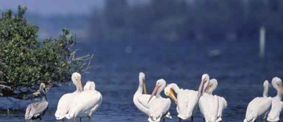 Flock to a wonderland of birds on tiny Pelican Island