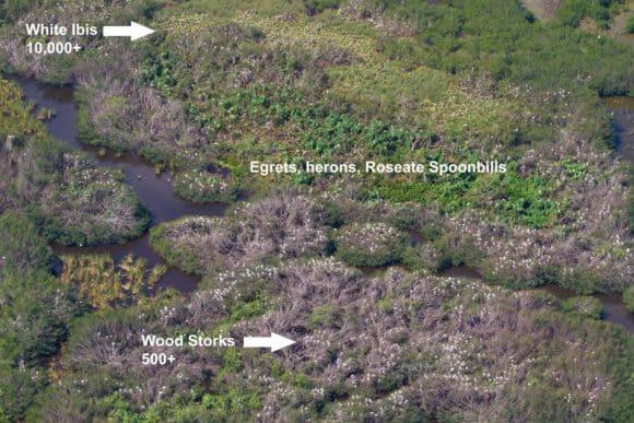 Aerial view of super colony of nesting birds. Photo courtesy Everglades National Park.