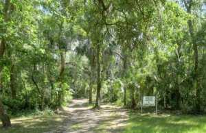 Trail to primitive campsites at Alderman's Ford Park.
