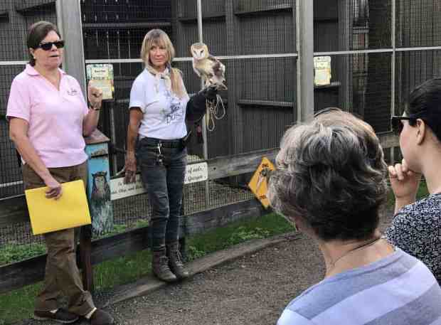 Owl program at Busch Wildlife Sanctuary in Jupiter. (Photo: Bonnie Gross)