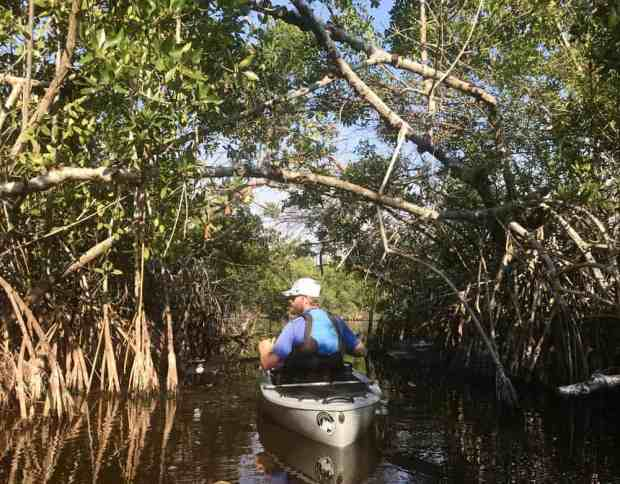 The East River is a brackish river lined with mangroves. Its a series of narrow twisting mangrove tunnels that widen into small lakes. (Photo: Bonnie Gross)