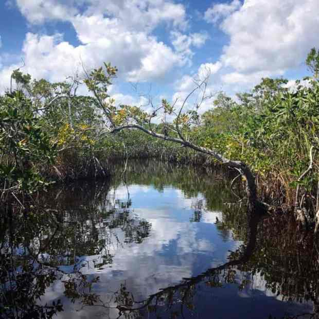 The view along Everglades National Park Hell's Bay Kayak Trail. (Photo: Bonnie Gross)