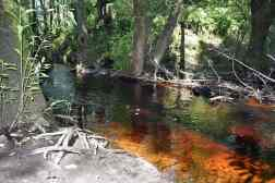 The tannic water in Fisher Creek.