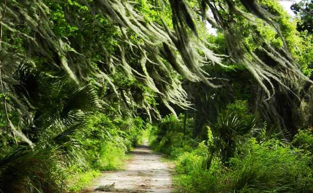 Moss blows in the wind on the Shady Oak Trail. Photo by Bonnie Gross.