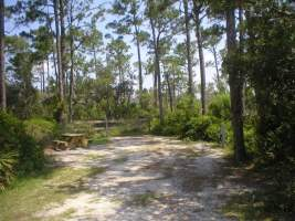 Campsite at Big Lagoon State Park