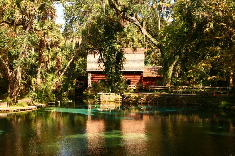 5 Things To Do In Ocala National Forest Florida Rambler