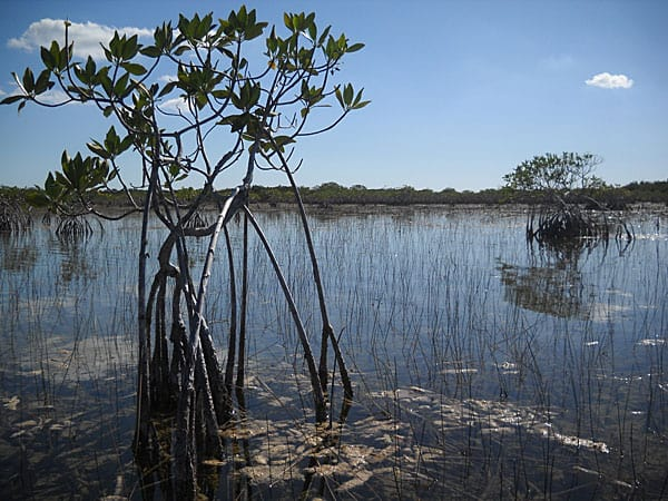 The view along Everglades National Park Nine Mile Pond canoe trail
