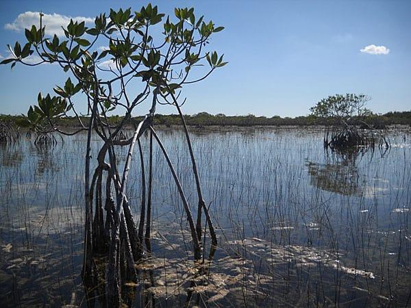 The view along Everglades National Park Nine Mile Pond canoe trail