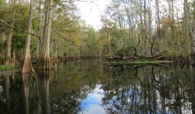 Reflections along Fisheating Creek.