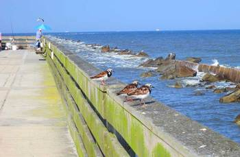 Fishing pier at Amelia Island's Fort Clinch State Park.