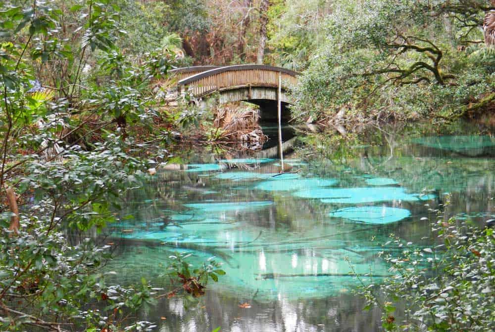 nature trail bridge at Juniper Springs