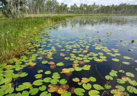 lily-pads-lake-godwin