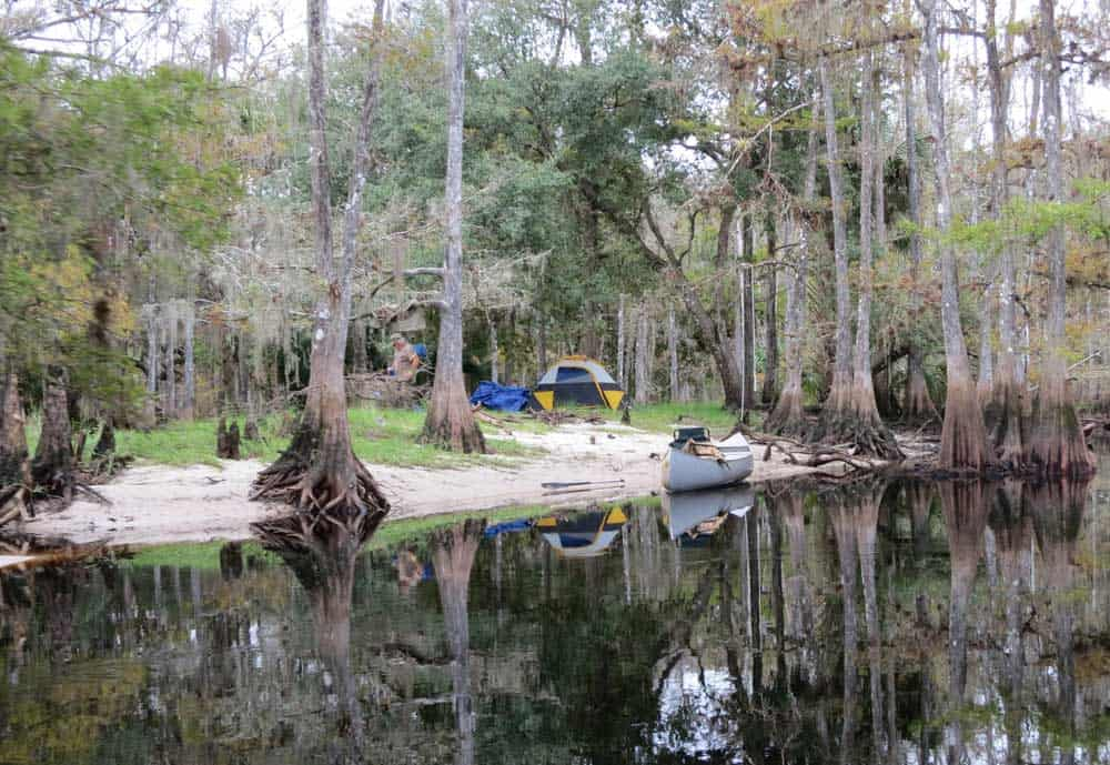 Legendary fisheating creek florida kayak trail lives up for Fish creek florida