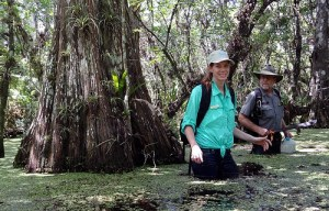 Park rangers gather samples in the Big Cypress Preserve