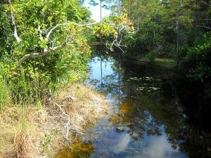 A view from a bridge at Riverbend Park, Jupiter, Florida