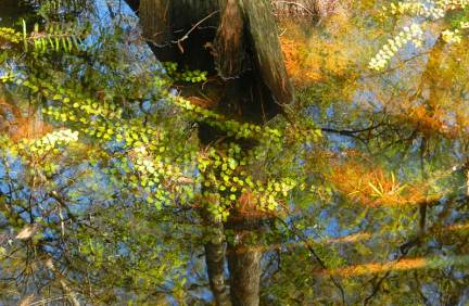 Ferns, lichen, cypress and airplants add beauty to Six Mile Cypress Slough Preserve, Fort Myers.